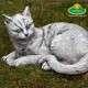 macska cica