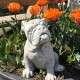 Boxer kutya szobor