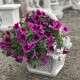 eladó virágkosár