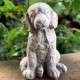 Kutyus aranyos kerti szobor