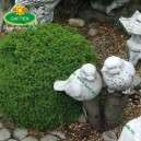 Kerti dekoráció kő madár