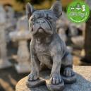 Francia Bulldog kiskutya