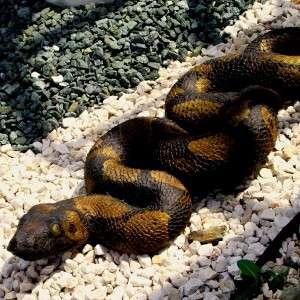 Kígyó kerti dísz figura+vízköpő kerti tóhoz