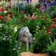 Kutyus kőből kerti dekorálásának