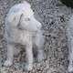 kutya kerti dísz szobor
