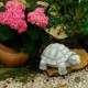 Teknős kerti tó dekoráció