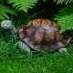 Díszfigura teknős