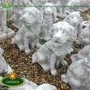 eladó kutya